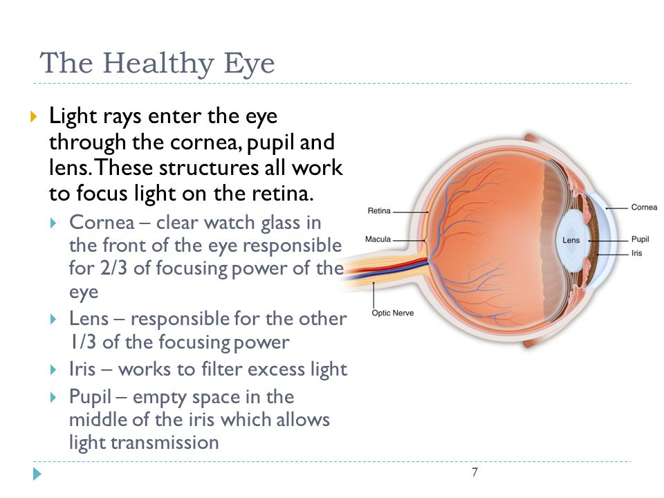 The Healthy Eye Light rays enter the eye through the cornea, pupil and lens. These structures all work to focus light on the retina.