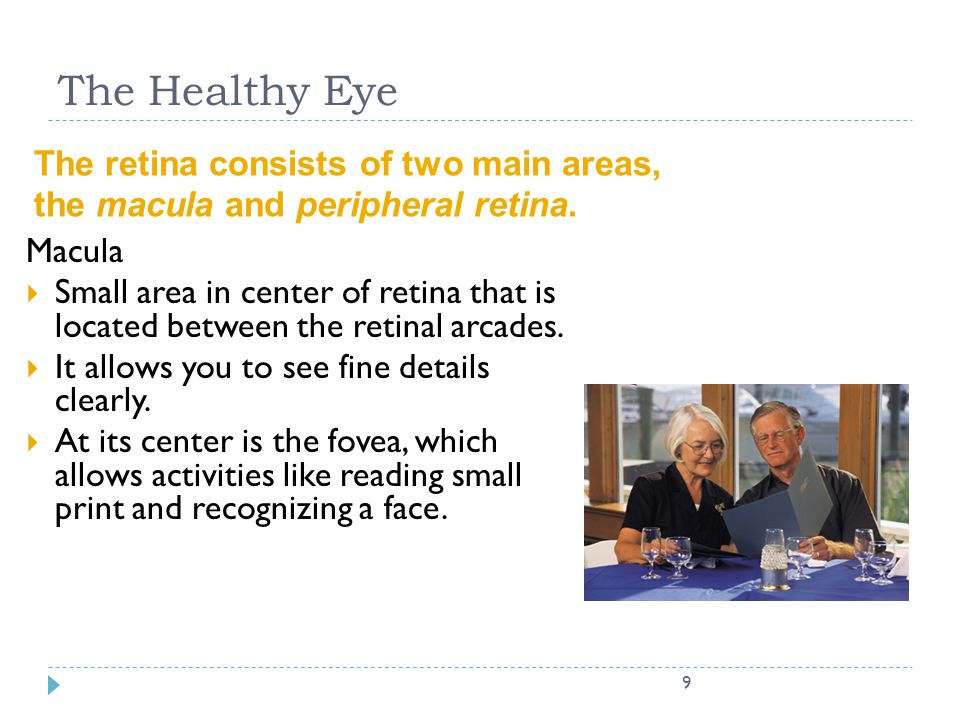 The Healthy Eye The retina consists of two main areas,