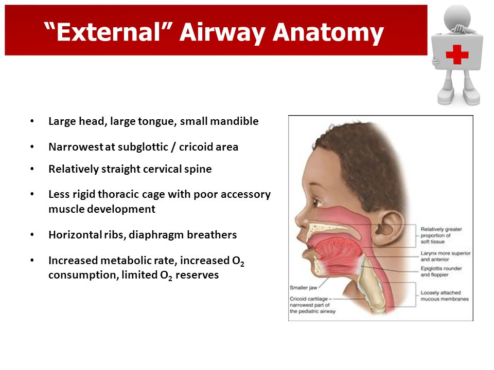 External Airway Anatomy