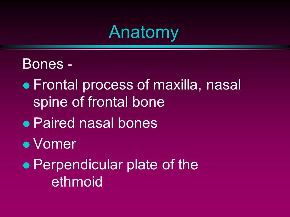 Anatomy Bones - Frontal process of maxilla, nasal spine of frontal bone. Paired nasal bones. Vomer.