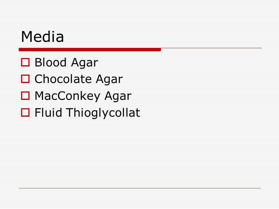 Media Blood Agar Chocolate Agar MacConkey Agar Fluid Thioglycollat