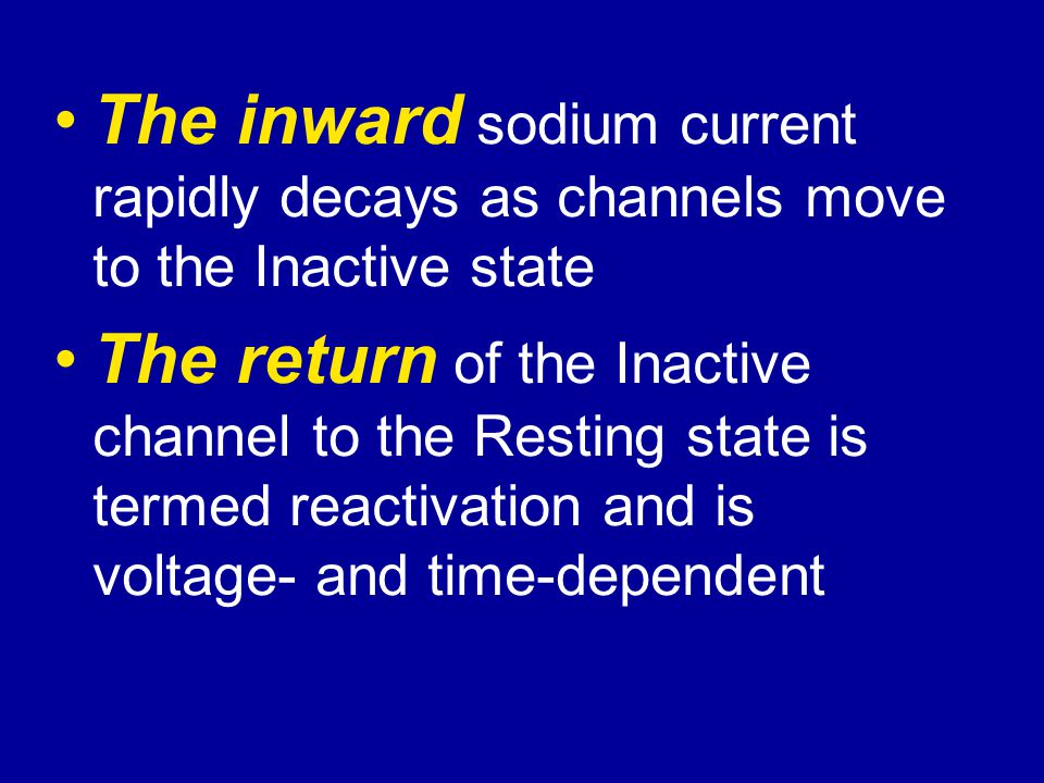 The inward sodium current rapidly decays as channels move to the Inactive state