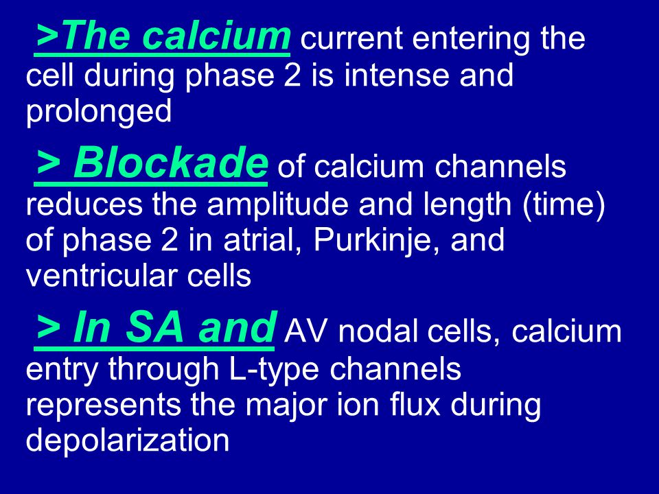 >The calcium current entering the cell during phase 2 is intense and prolonged
