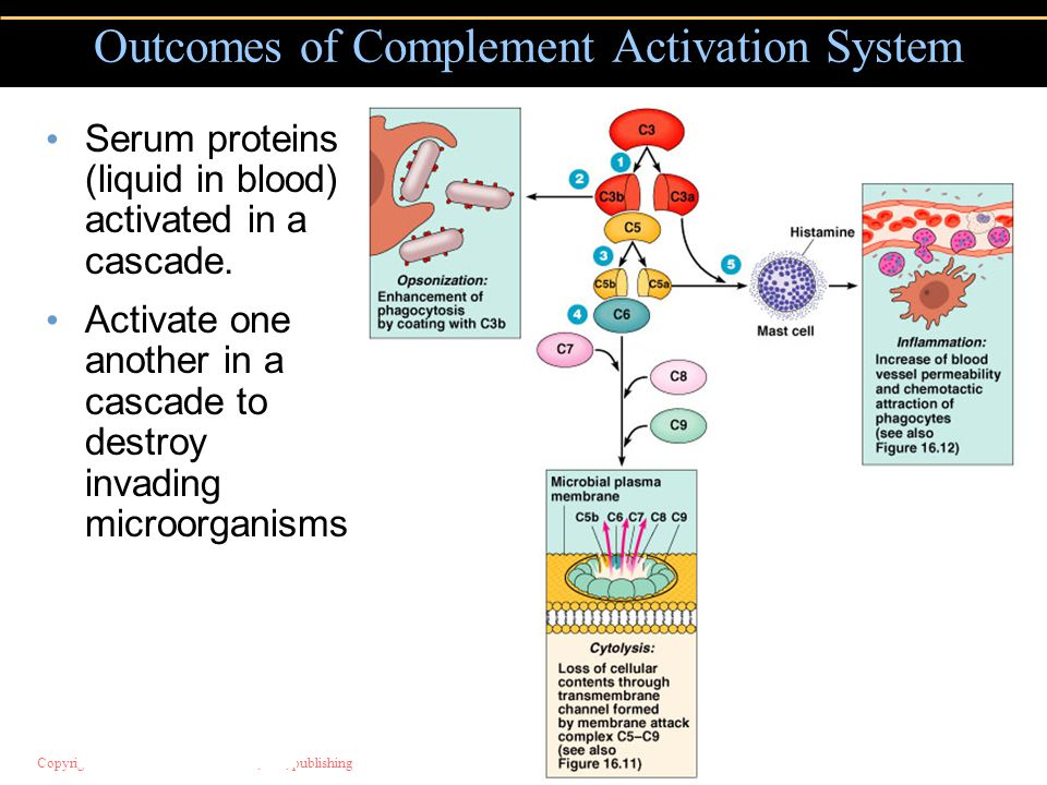 Outcomes of Complement Activation System