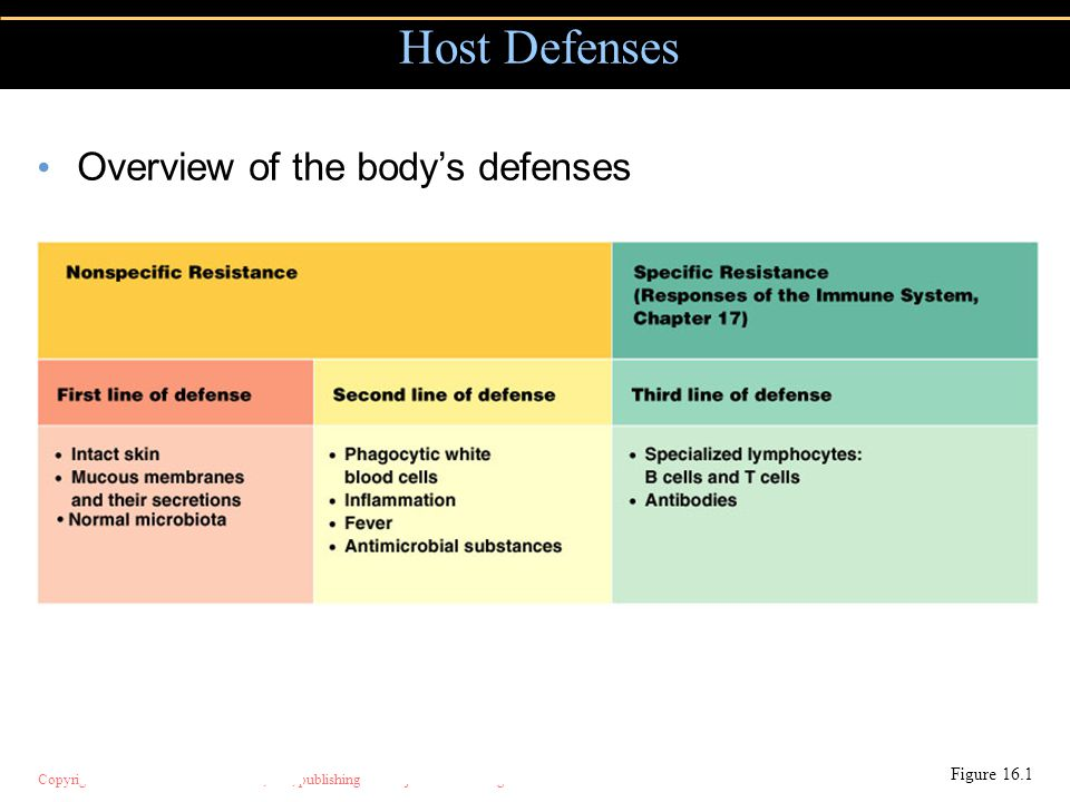 Host Defenses Overview of the body's defenses Figure 16.1
