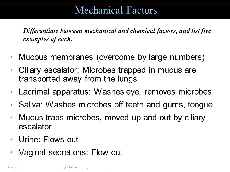 Mechanical Factors Mucous membranes (overcome by large numbers)