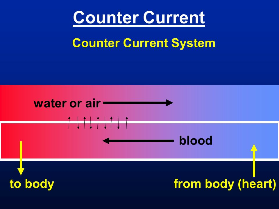 Counter Current Counter Current System water or air blood to body