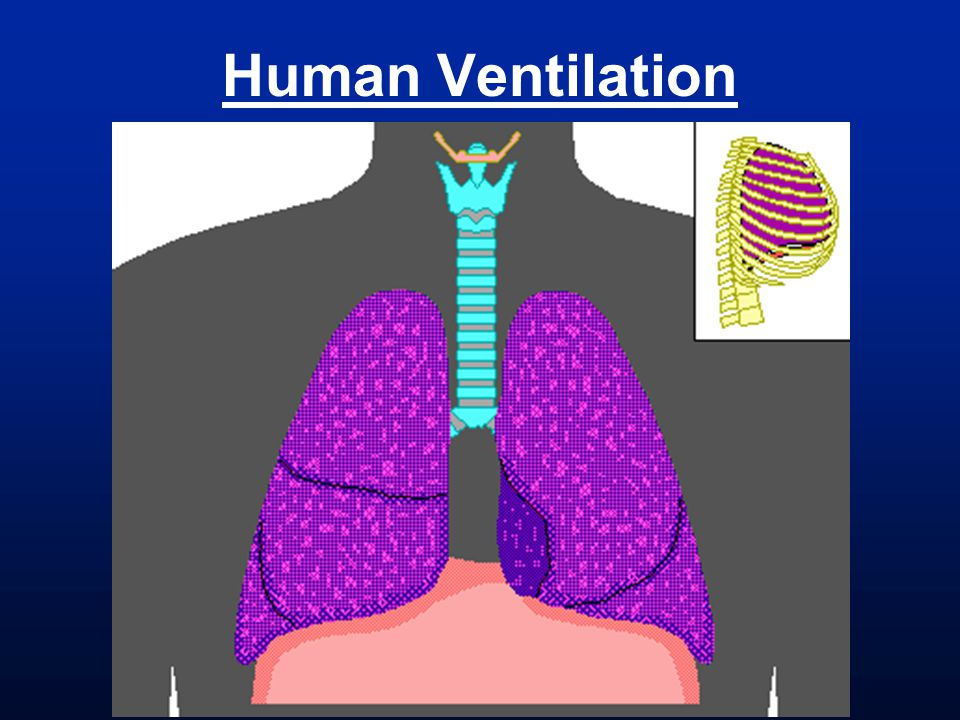 Human Ventilation