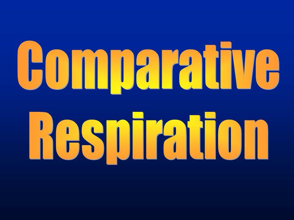 Comparative Respiration