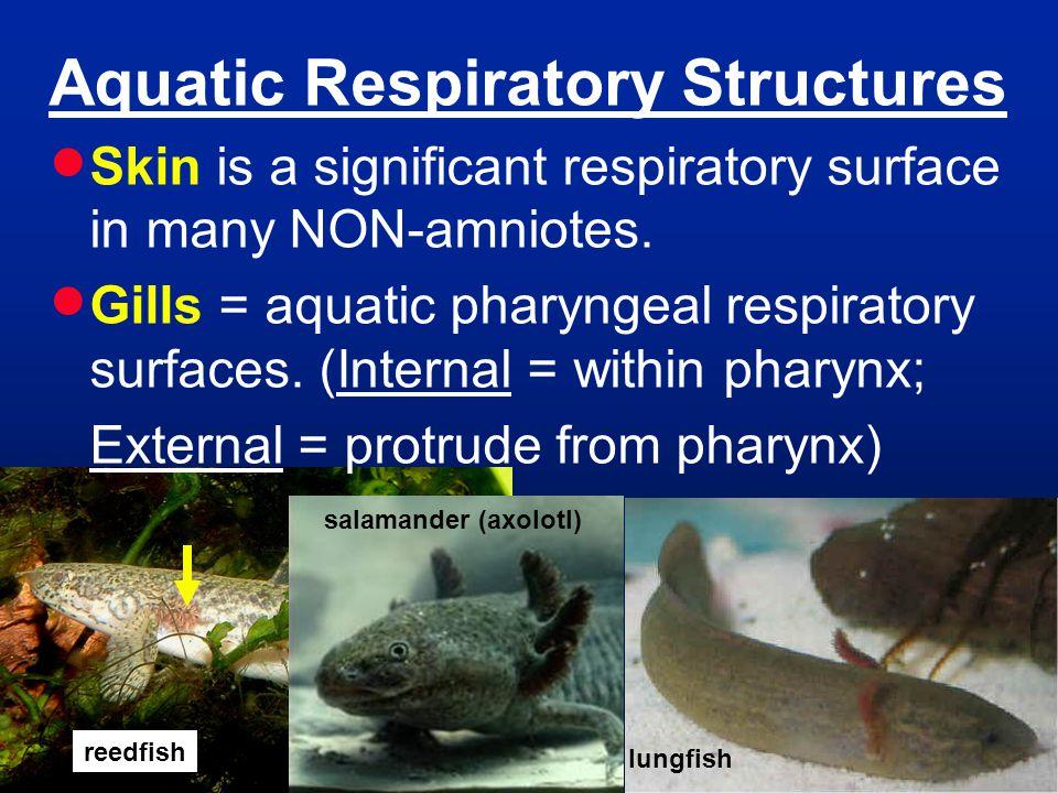 Aquatic Respiratory Structures