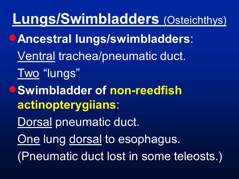 Lungs/Swimbladders (Osteichthys)