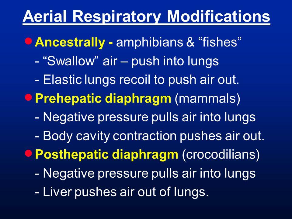 Aerial Respiratory Modifications