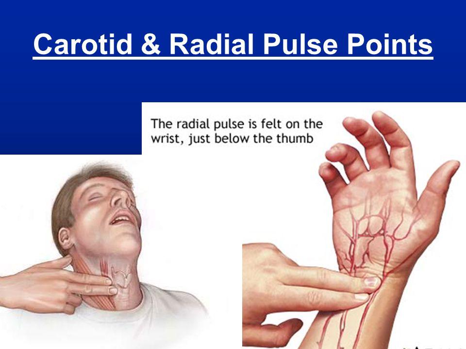 Carotid & Radial Pulse Points