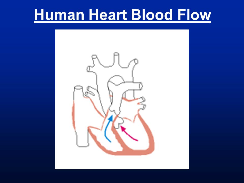 Human Heart Blood Flow