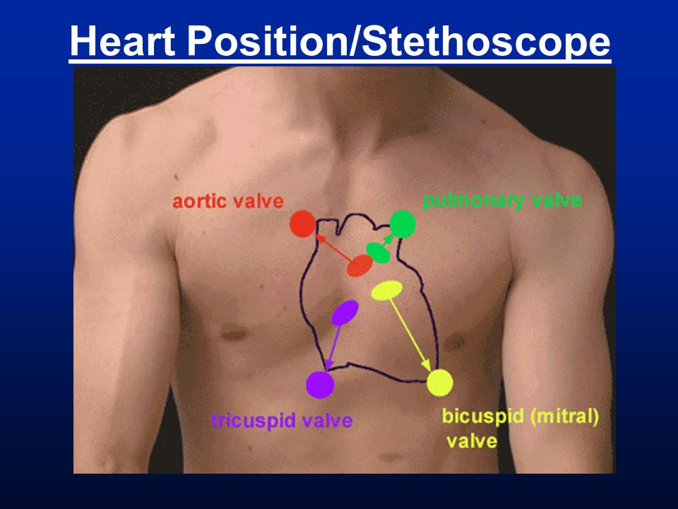 Heart Position/Stethoscope