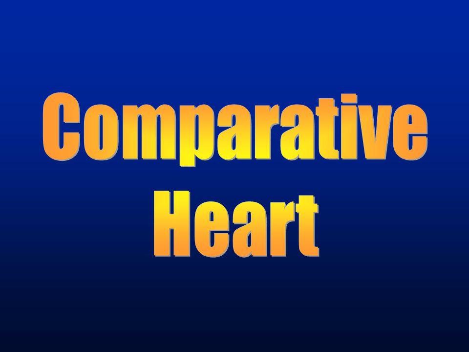 Comparative Heart