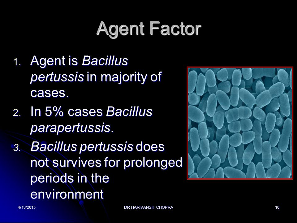 Agent Factor Agent is Bacillus pertussis in majority of cases.