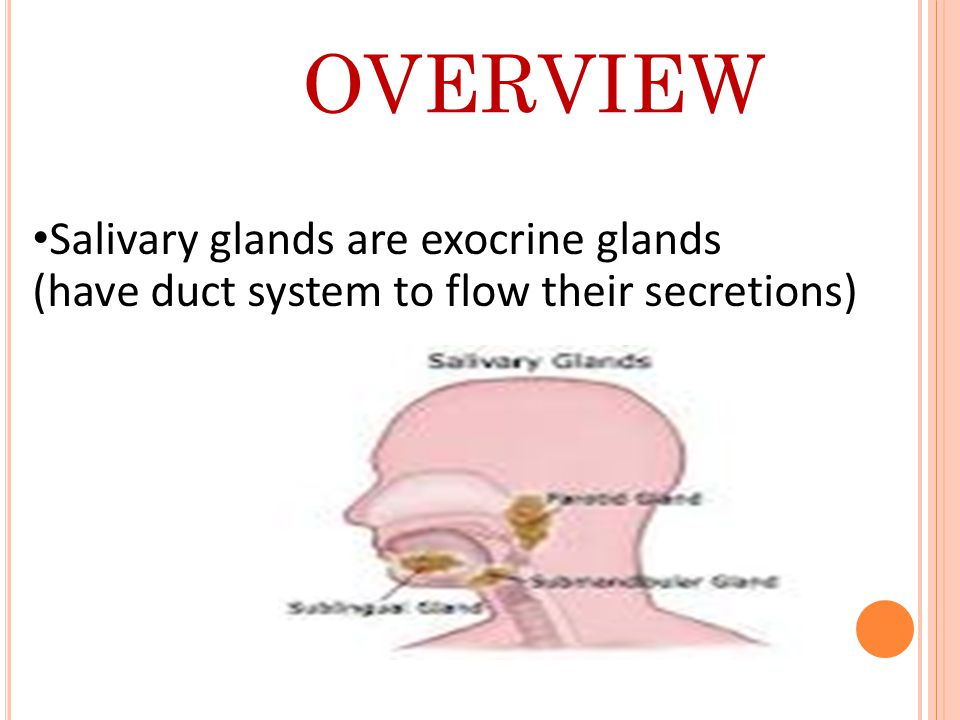 OVERVIEW Salivary glands are exocrine glands