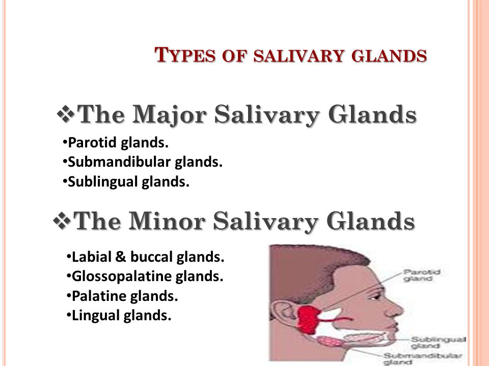 Types of salivary glands