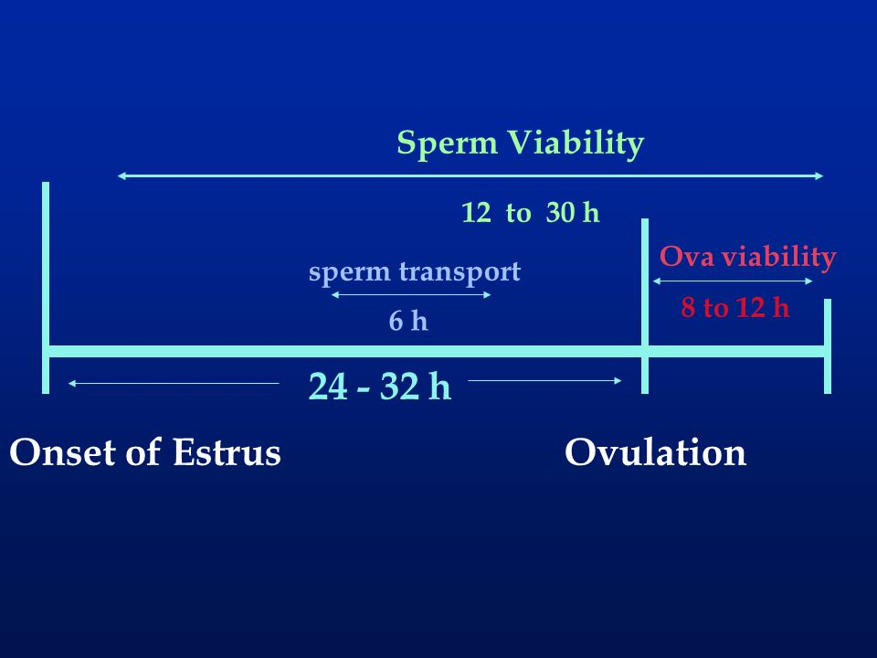 24 - 32 h Onset of Estrus Ovulation Sperm Viability 12 to 30 h
