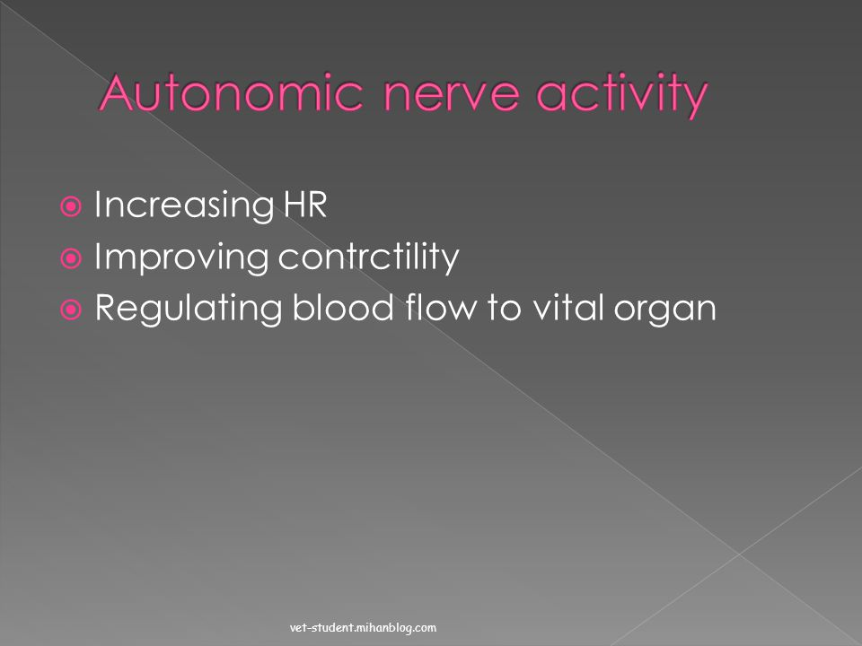 Autonomic nerve activity