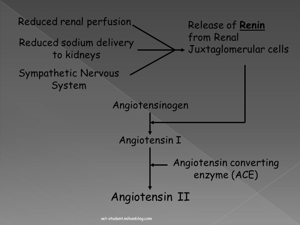Angiotensin II Reduced renal perfusion Release of Renin