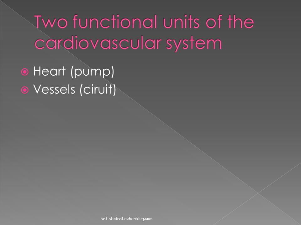 Two functional units of the cardiovascular system