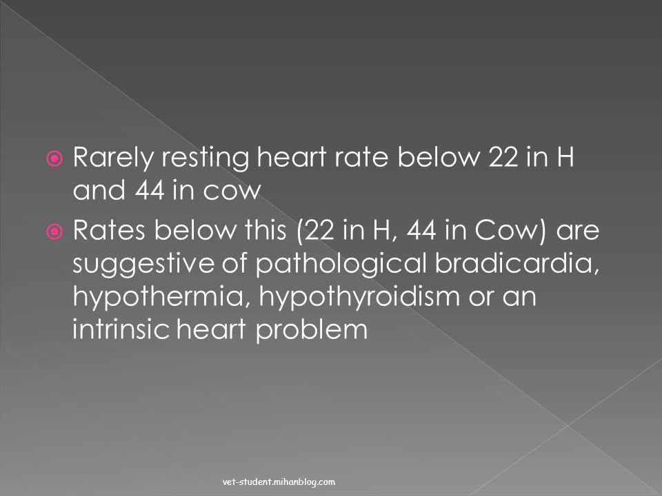 Rarely resting heart rate below 22 in H and 44 in cow