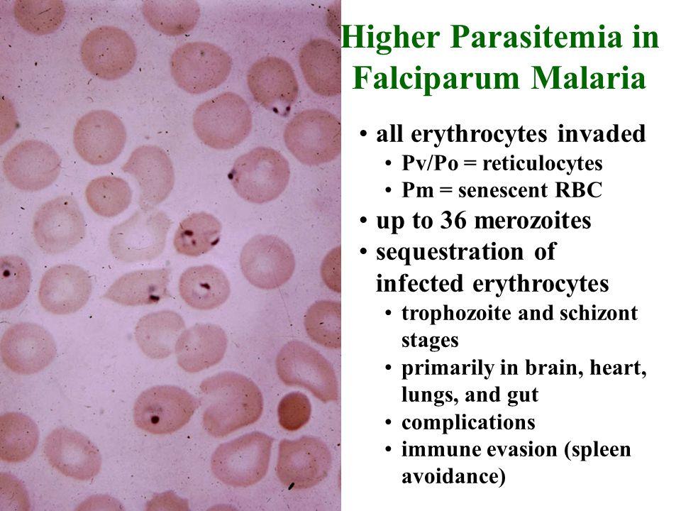 Higher Parasitemia in Falciparum Malaria