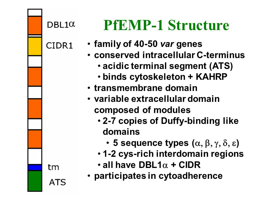 PfEMP-1 Structure family of 40-50 var genes