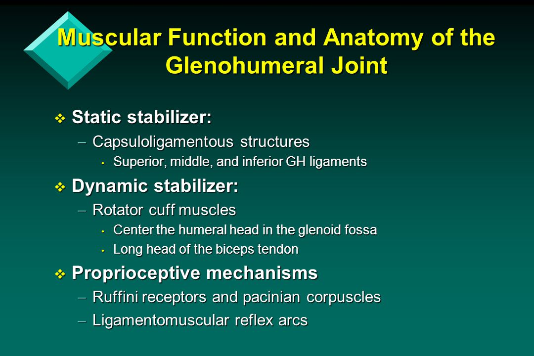 Muscular Function and Anatomy of the Glenohumeral Joint