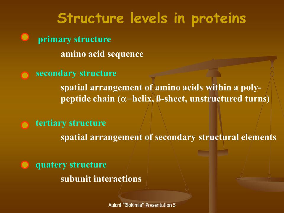 Structure levels in proteins