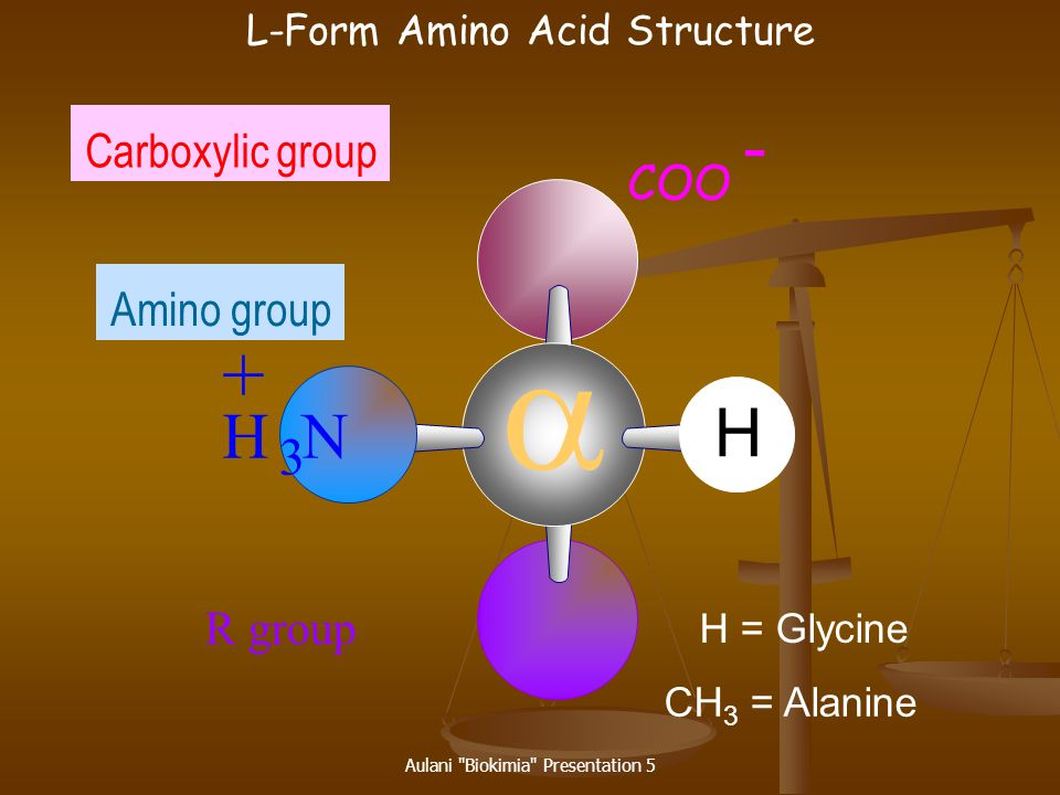 a - + H H N Carboxylic group Amino group 3 COO R group