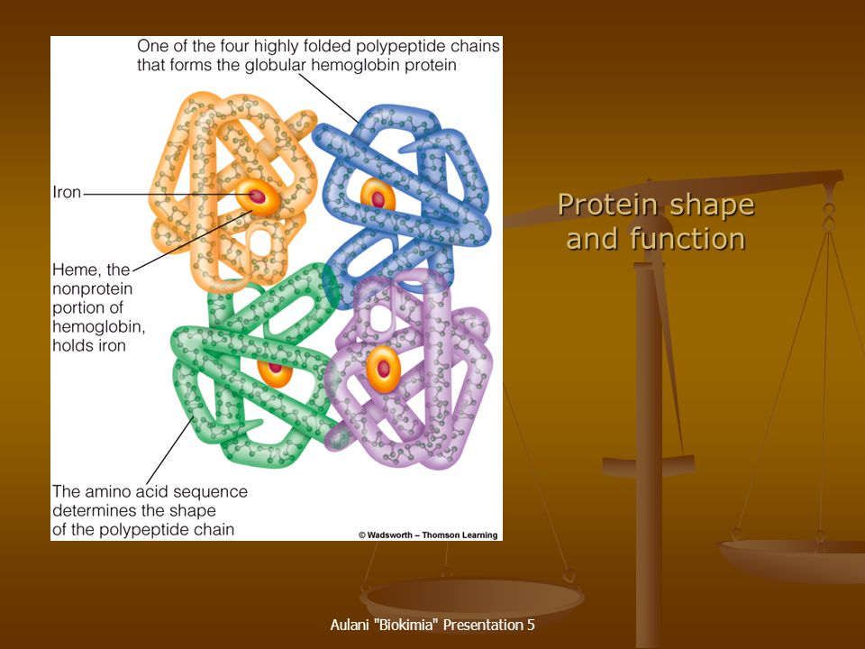 Protein shape and function
