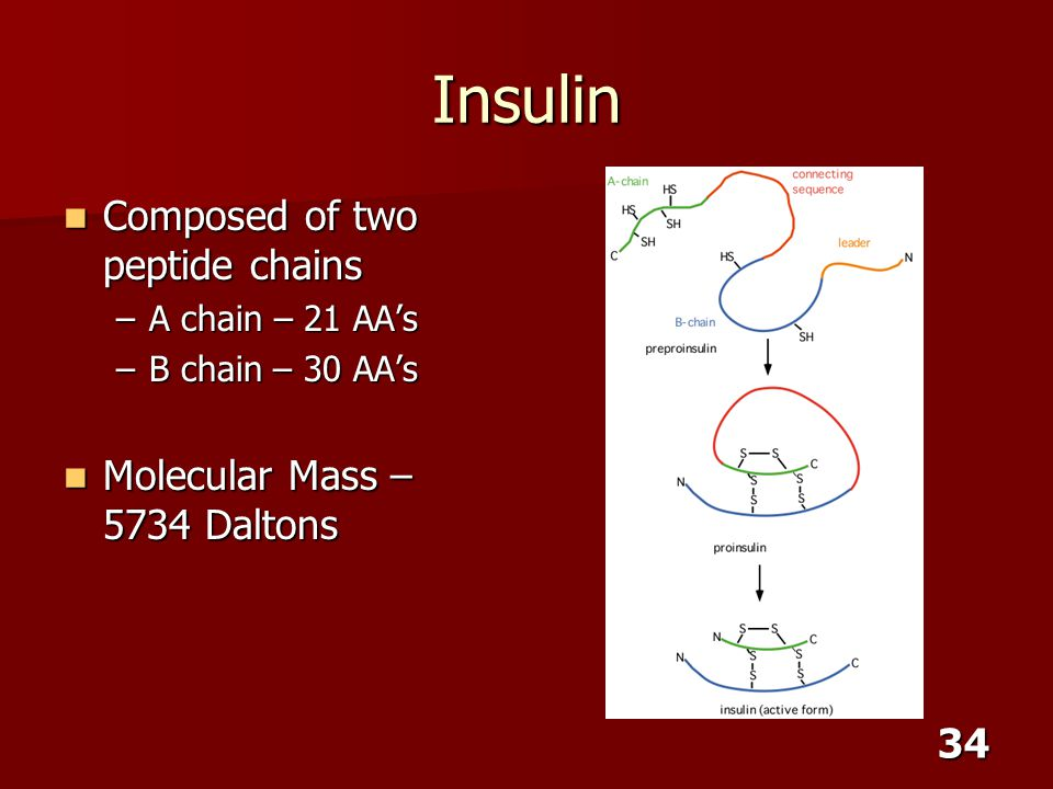 Insulin Composed of two peptide chains Molecular Mass – 5734 Daltons