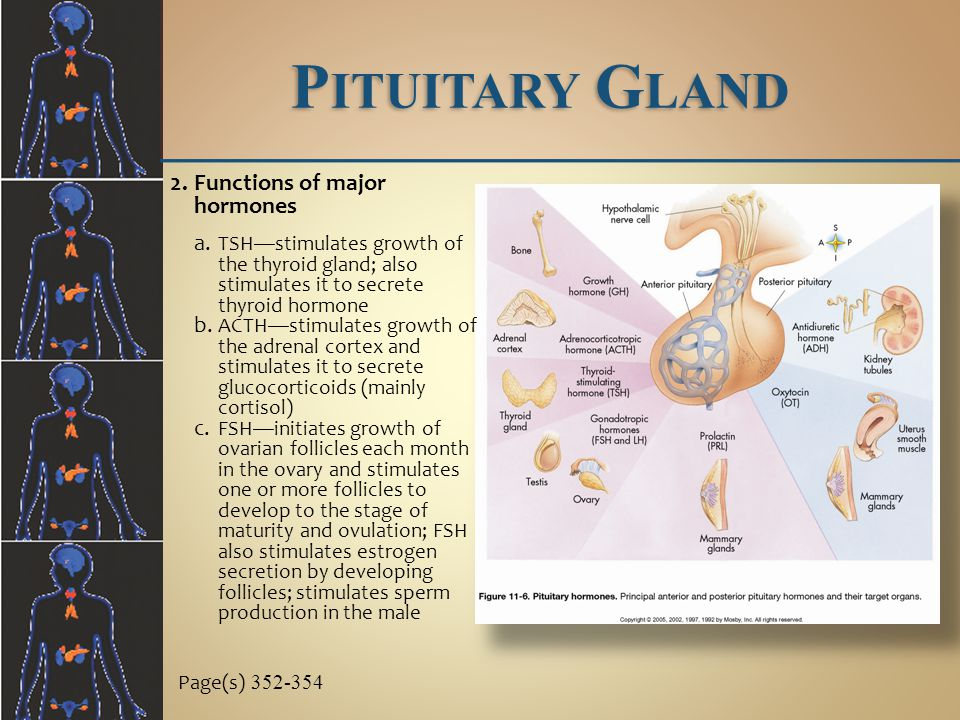 Pituitary Gland Functions of major hormones
