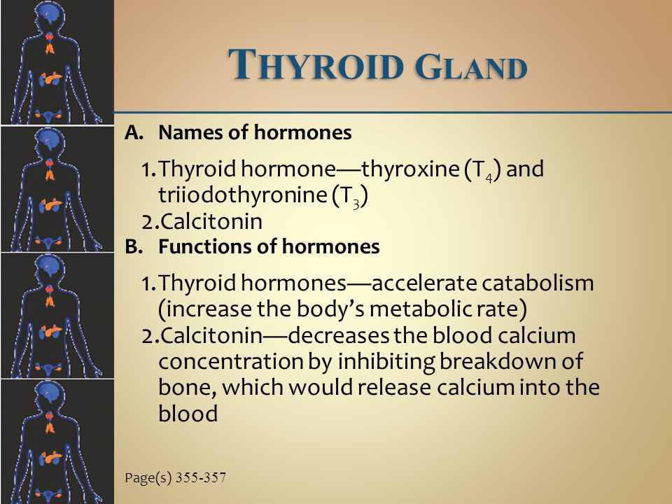 Thyroid Gland Thyroid hormone—thyroxine (T4) and triiodothyronine (T3)