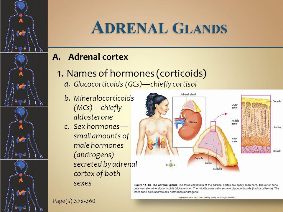Adrenal Glands Names of hormones (corticoids) Adrenal cortex
