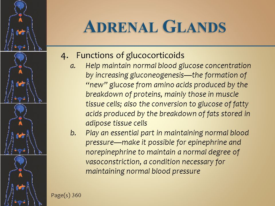 Adrenal Glands Functions of glucocorticoids
