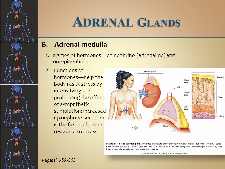 Adrenal Glands Adrenal medulla