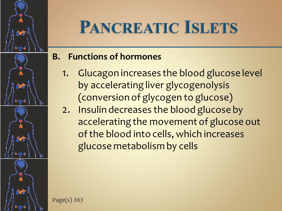 Pancreatic Islets Functions of hormones.