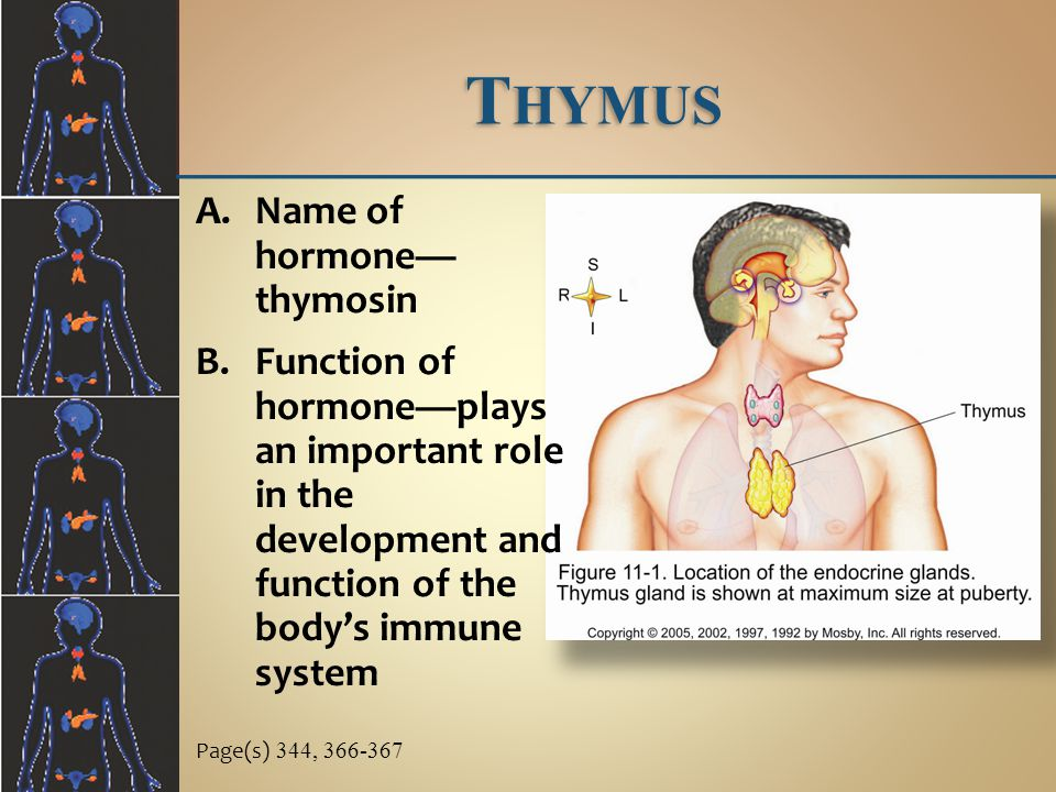 Thymus Name of hormone— thymosin