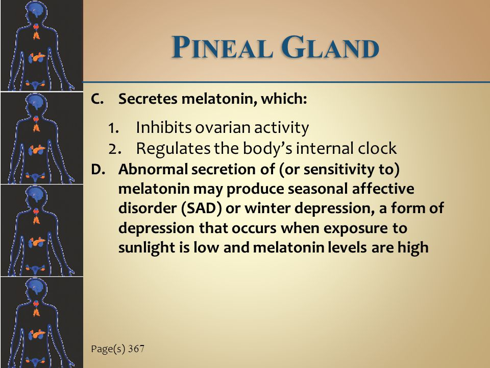 Pineal Gland Inhibits ovarian activity