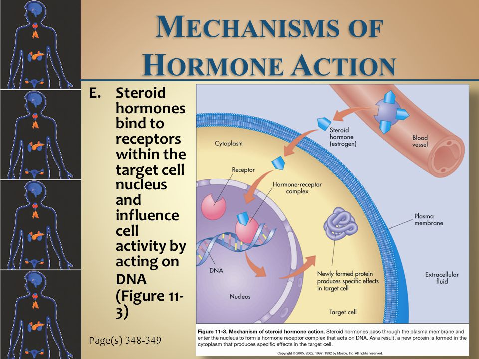 Mechanisms of Hormone Action