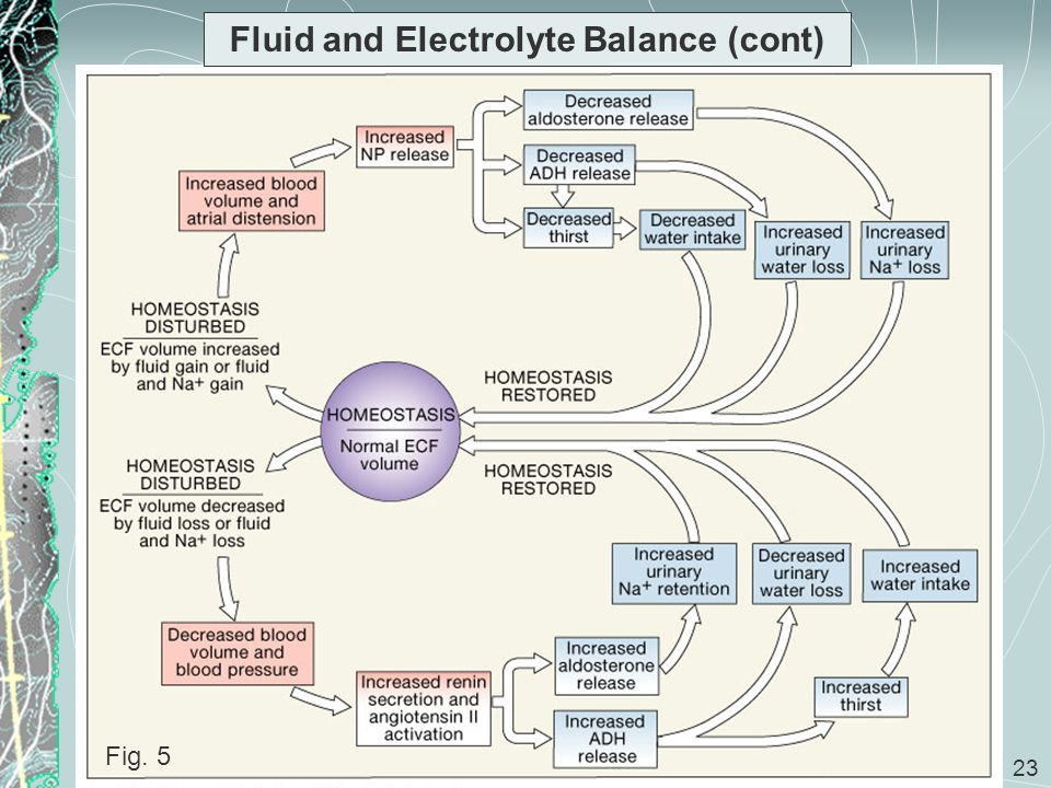 Fluid and Electrolyte Balance (cont)
