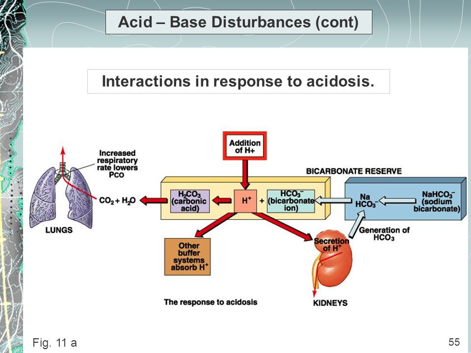 Acid – Base Disturbances (cont) Interactions in response to acidosis.