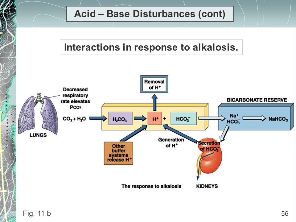 Acid – Base Disturbances (cont) Interactions in response to alkalosis.