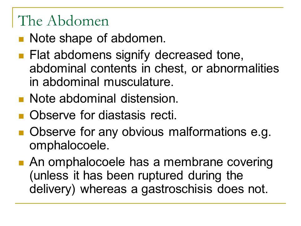 The Abdomen Note shape of abdomen.