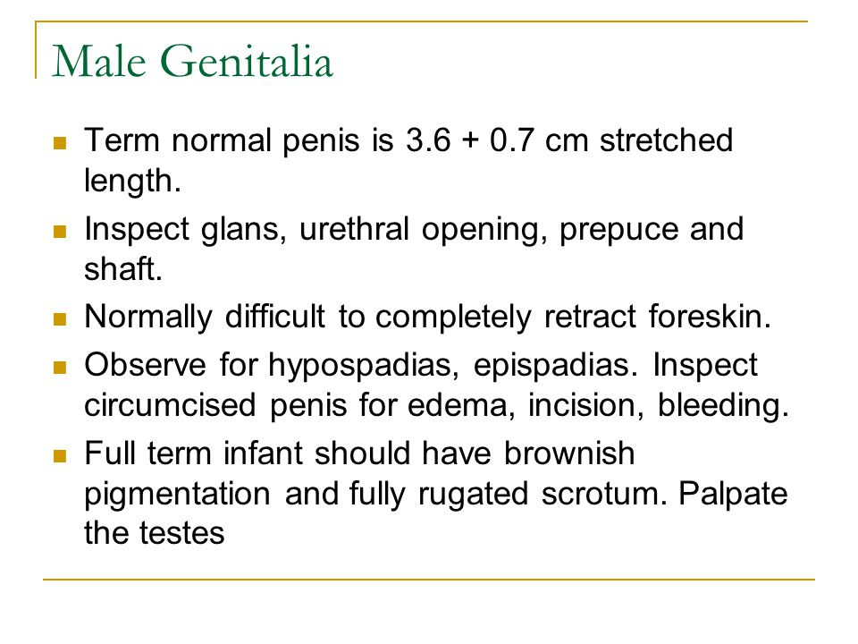 Male Genitalia Term normal penis is 3.6 + 0.7 cm stretched length.