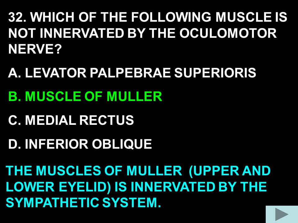 32. WHICH OF THE FOLLOWING MUSCLE IS NOT INNERVATED BY THE OCULOMOTOR NERVE
